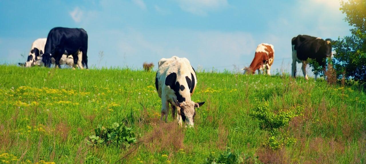 reclamar cártel de leche en Galicia